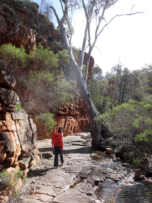 Hidden Gorge, Hike, Mt Remarkable, Flinders Ranges, South Australia, Mambray Creek, Melrose