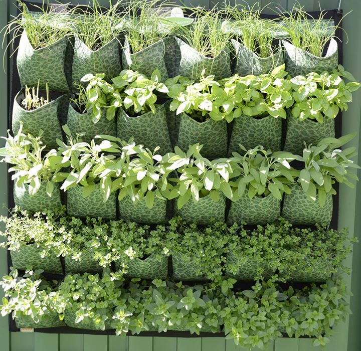 Make Your Own Vertical Garden with Karen Montgomery Adelaide