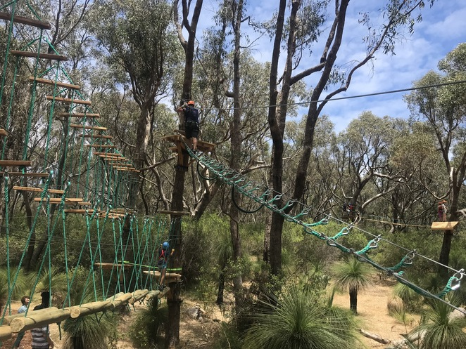 trees adventure yanchep, outdoor tree course, ziplines perth, things to do at Yanchep National Park, fun things to do, things to do in the school holidays, tree top adventure, perths best adventure playground