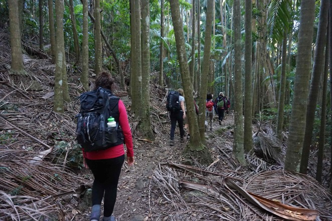 Walking on Palm Grove Rainforest Circuit