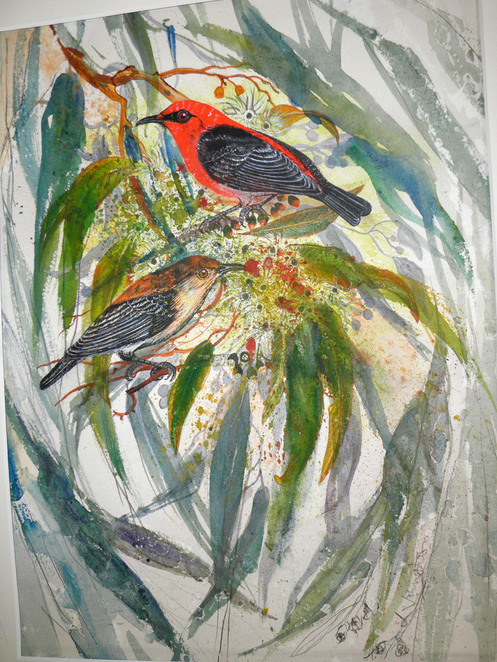 watercolour, bird, Louise Johnston
