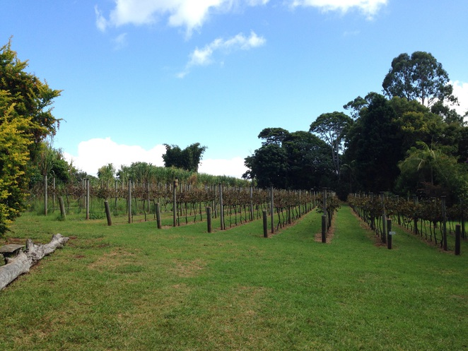 Witches falls winery, mount tambourine, wineries on the Gold Coast, things to do on the Gold Coast, wine, wineries