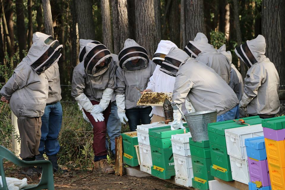 Delicieux Beekeeping,Beekeeping For Beginners,Beekeeping Courses,Beekeeping Clubs  Melbourne,Beekeeping Courses Victoria