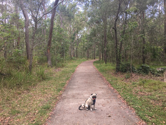 beryl roberts park, brittain park, coopers plains, creek, walk, dog walk, dog park, off leash dog park, southside, brisbane, southern suburbs, salisbury, sunnybank, eight mile plains, playground, barbecue, picnic, gazebo, fitness circuit, fitness centre, nature, bushwalk