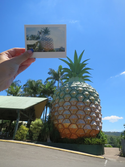 big things, australia, road trip, attraction, tourist, queensland, brisbane, cairns, sunshine coast, nambour, woombye, big pineapple, iconic, queensland