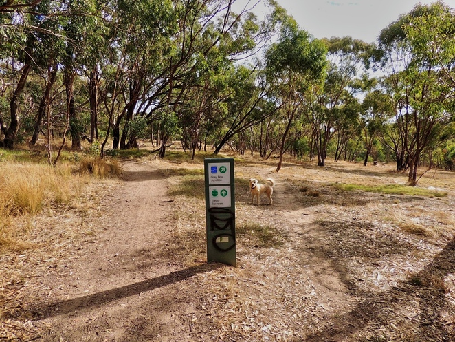 blackwood hill reserve, blackwood, local history, mitcham trails, mountain biking, off leash dog parks, mitcham council, walking trails, dogs