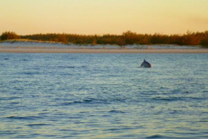 A dolphin between Caloundra and Bribie Island at sunset