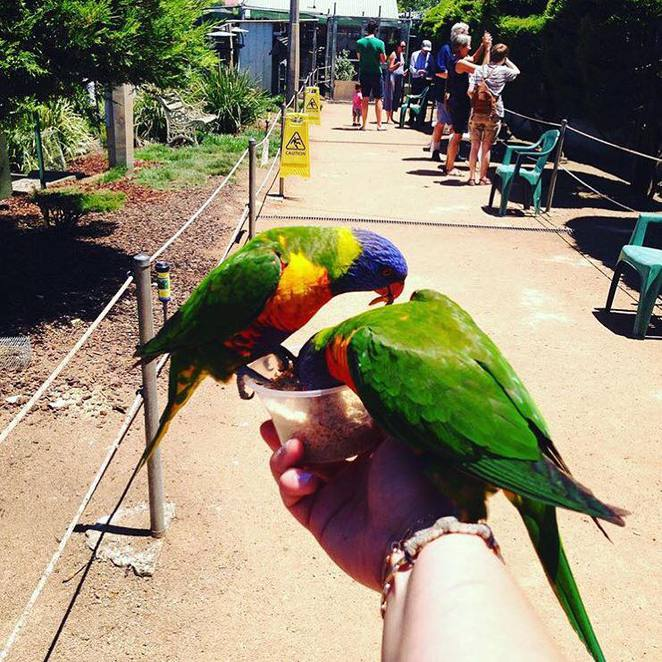 canberra walk in aviary, gold creek village, canberra, school holidays, kids, family,