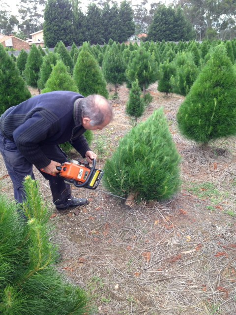christmas, tree, xmas, farm, decorations - Diamond Valley Christmas Tree Farm - Melbourne