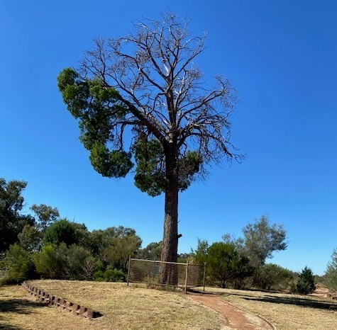 Cunnamulla, Outback, Queensland, History, Places of Interest, Adventure, Misc, Learn Something