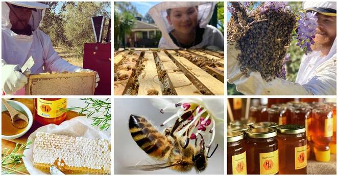 Hayes Honey, Hayes Honey Open Day, bees, honey, honeycomb, beekeepers, apiary, apiarists