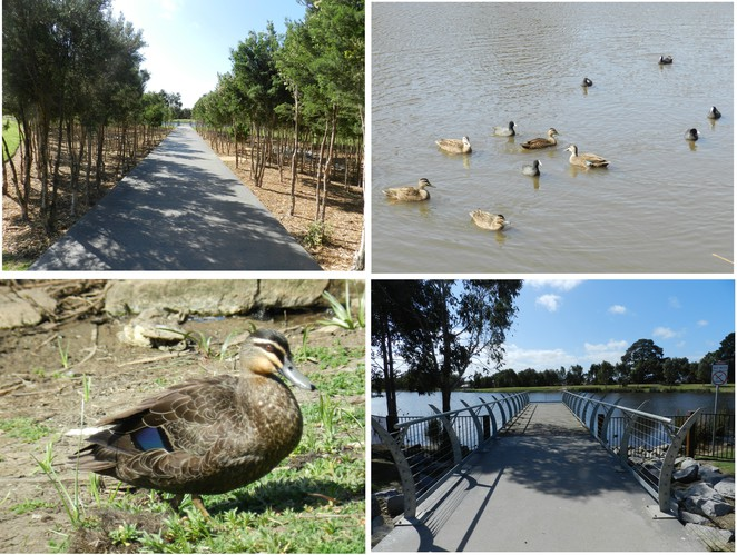 lake, ducks, lake trail, casey fields, playground, playgrounds in casey, playgrounds in cranbourne, playgrounds in melbourne,