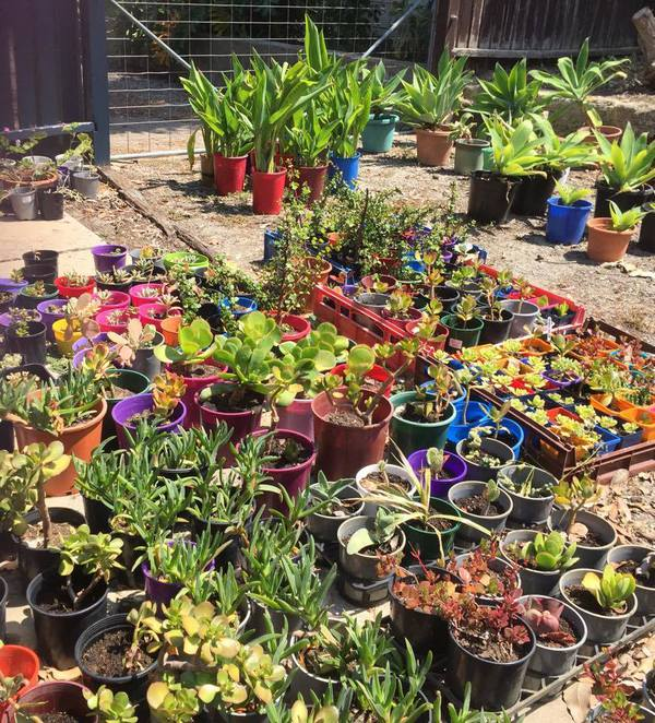 Lots of Fun for Kids and Opportunities to Improve your Garden too!
