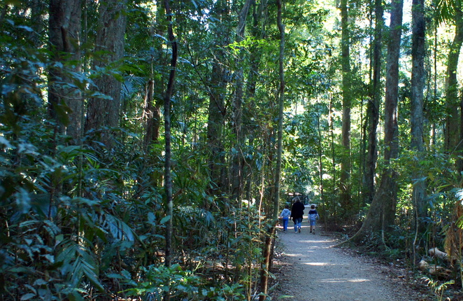 Mary Cairncross Nature Reserve is a family friendly pocket of old growth rainforest