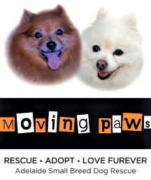Moving Paws, birthday, luncheon, fundraiser, 2018, logo
