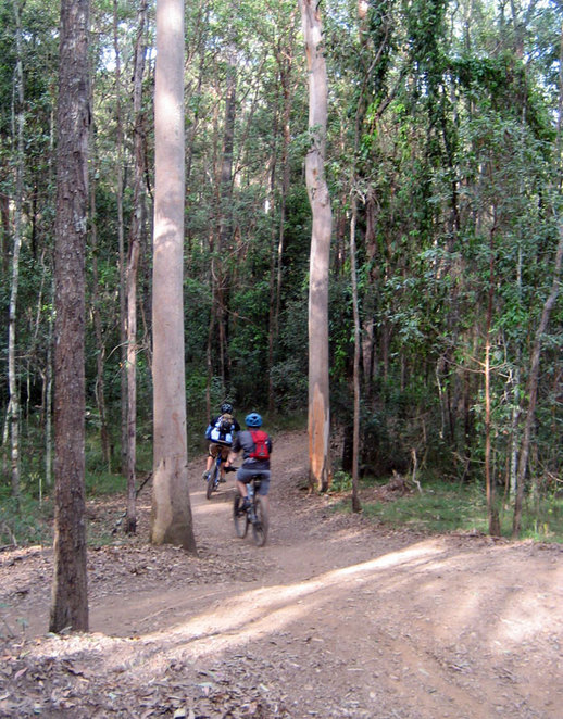Mountain Bikers at Mt Coot-Tha