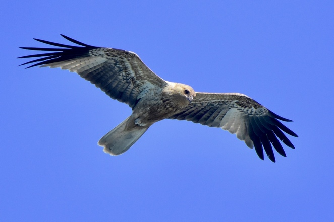 Look out for whistling kites and other birds soaring above the treetops