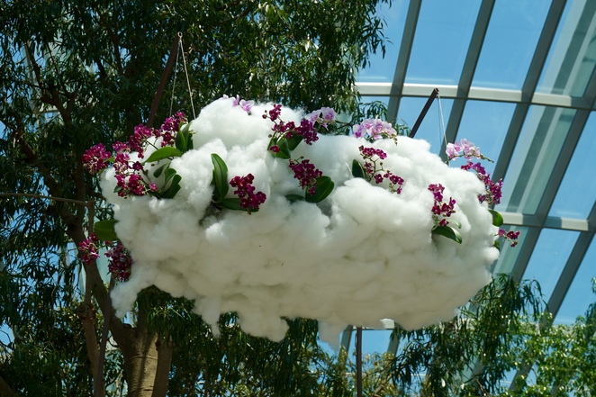 orchids in clouds of cotton wool