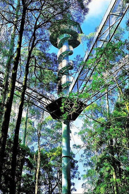 places to visit in Victoria,day trips from Melbourne,weekend getaways,day trips Victoria,long weekend,weekend getaways Melbourne,great ocean road,Apollo bay,12 apostles,otway, otway ranges, otway fly, treetop walk,