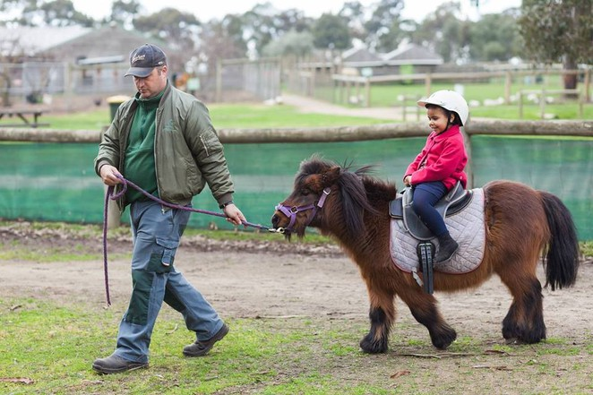 pony, farm children's farm, Melbourne, Bundoora, entertainment, pony ride,