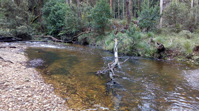 river, Blackwood, Australian bush, river bank, country