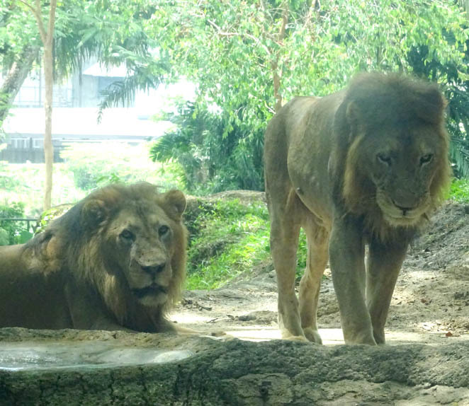 Singapore Zoo, conservation, nature, animals, interactive, kid friendly, family friendly, fun