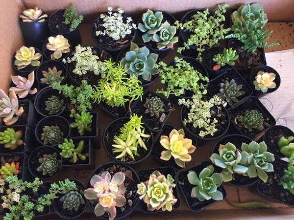some,of,my,plants