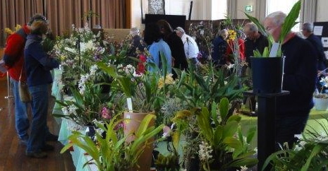 Canberra Spring Orchid Show