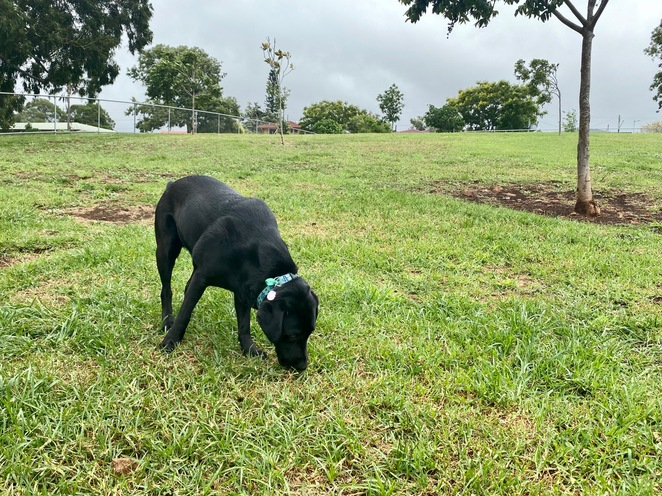Clearview Street Dog Park at Black Gully Reserve Park Network