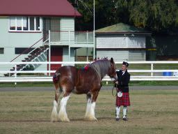 Clydesdale, Clydesdale Spectacular, Scenic Rim, Boonah