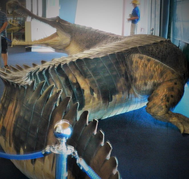 crocodile, museum, super croc, Museum of Tropical Queensland, Townsville, prehistoric, Queensland