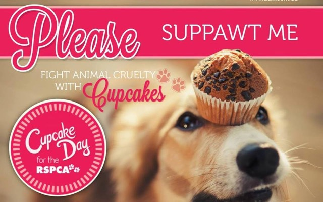 Cupcake Day for the RSPCA QLD, fun day out for whole family including furry family members, prizes, jumping castle, face painting, doggie washing, pet photography, maleny botanic gardens, worthy cause