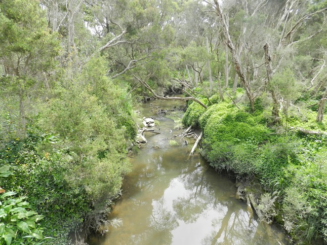 dandenong creek, jells park, parks in melbourne, walks in melbourne, wheelers hill,