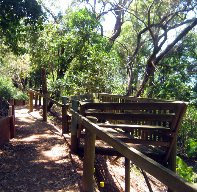 The Mangroves walk at Wellington Point