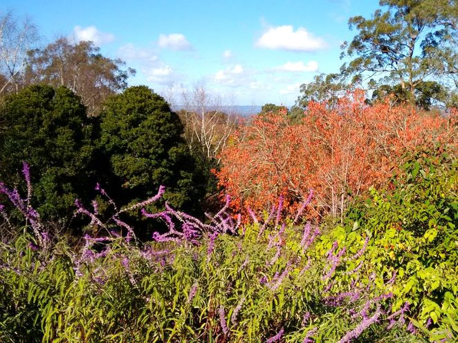Mount Lofty Botanic Garden, Botanic Garden, mount lofty, adelaide, 40th birthday, free
