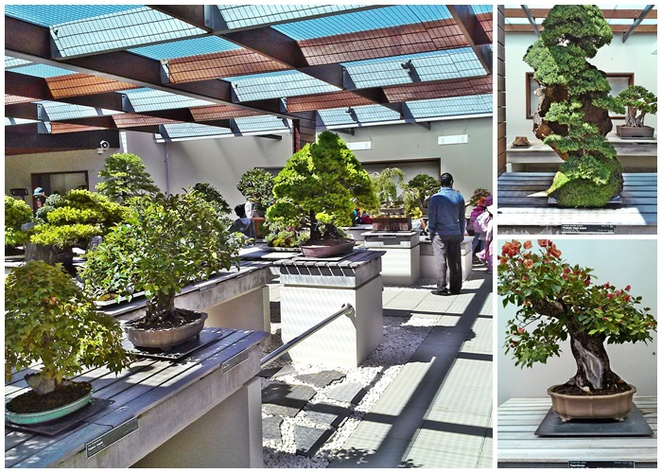 national bonsai and penjing collection, national arboretum, canberra, ACT, tourist attractions,