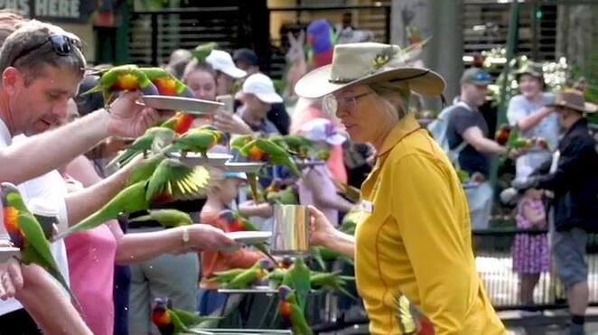 park volunteer training course 2020, currumbin wildlife sanctuary, community event, fun things to do, volunteer in 2020, environmental, animals, animal lovers, tours, exhibitions, stunning surrounds