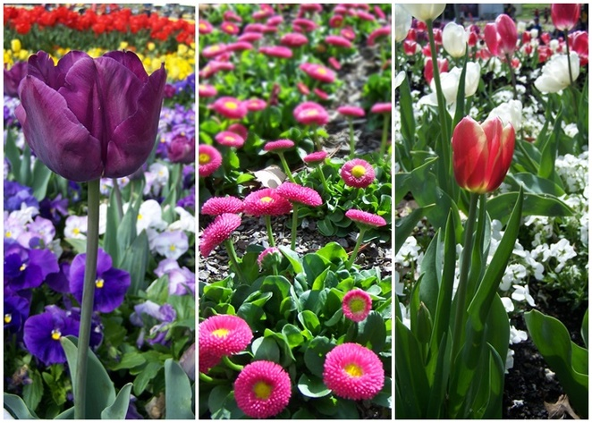 spring, canberra, floriade, tulip tops, ACT, seaons, weather in canberra, best season in canberra,