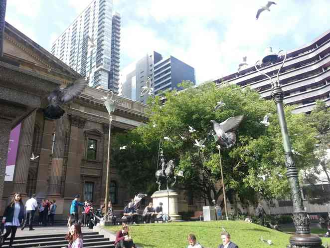 State Library Victoria lawns and birds