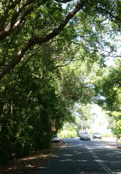 Tree lined streets, Noosa, forest, green