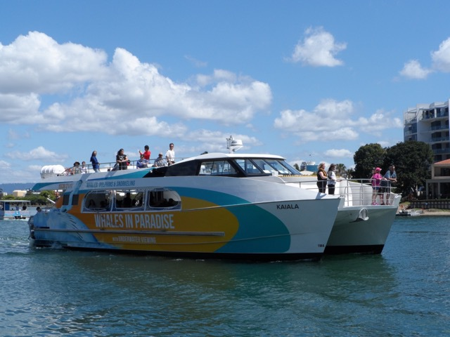 Whales in paradise, Whale watching Gold Coast, Gold Coast whale watching, whale watching on the Gold Coast, whale cruises Gold Coast, whale season Gold Coast, go whale watching, best whale watching experience on the gold Coast, what's on Gold Coast, things to do Gold Coast