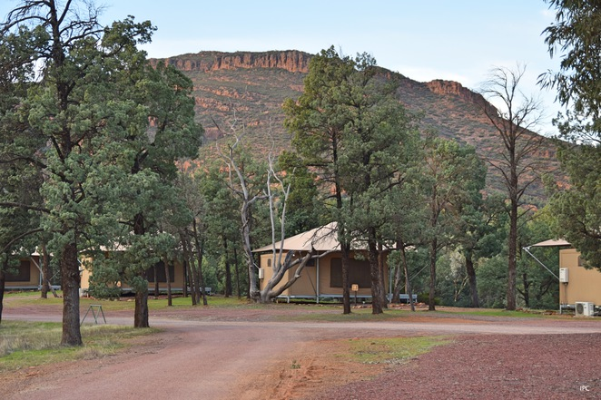 Wilpena Pound Resort, Glamping at Wilpena, Mawson Trail, Heysen Trail, Flinders by Bike, St Mary's Peak, Ikara Safari Tent