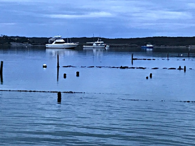 Coffin Bay, Oysters, Tours, Oyster Farm