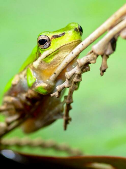 These beautiful little frogs are well worth visiting