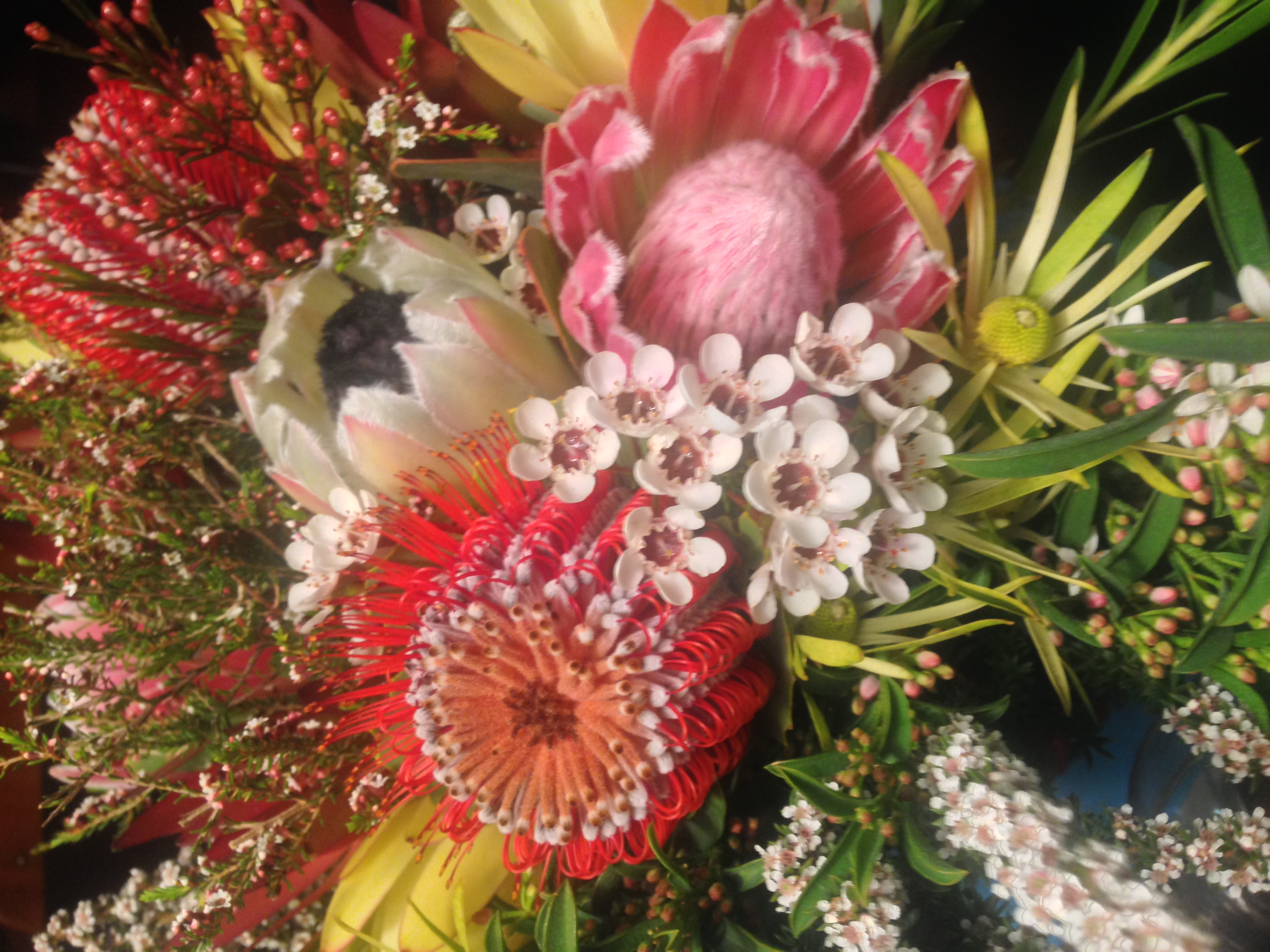 Fun and cheap activities in spring adelaide ideas for spring cheap things to do during spring flower class adelaide izmirmasajfo Choice Image