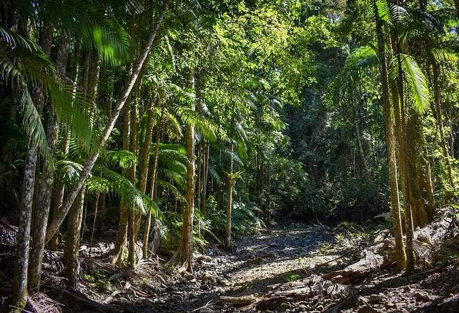 Mount Mee, D'Aguilar National Park, Daytrip, Mt Mee, Mount Mee, bushwalking, hiking, swimming spots, picnic, rainforest