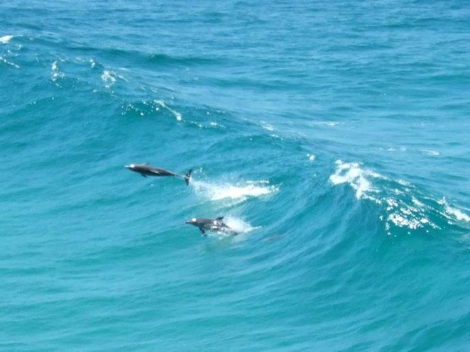 Dolphins seen from the cliffs at North Stradbroke