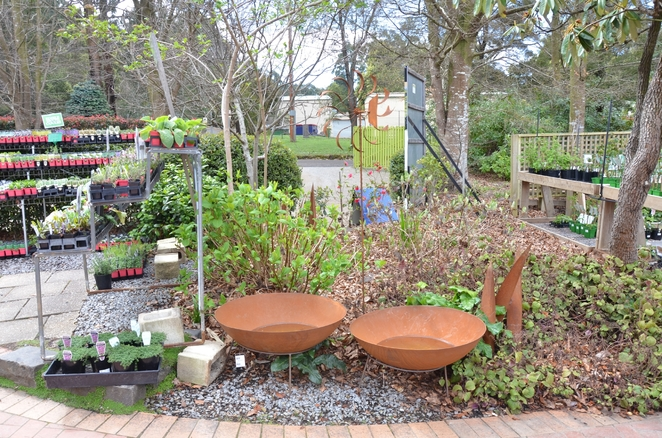 Nursery with world heritage plants for sale