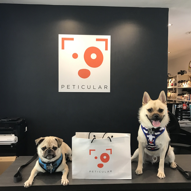 peticular, pet shop, boutique pet store, sunshine coast, peregian springs, sunny coast, dog friendly, dog cafe, puppacchino, dog menu, brisbane, zee dog, sweet chops, soapy moose, rosie and co barkery, new