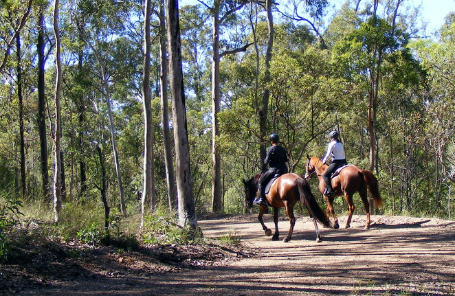 Horse riders at Samford Conservation Park